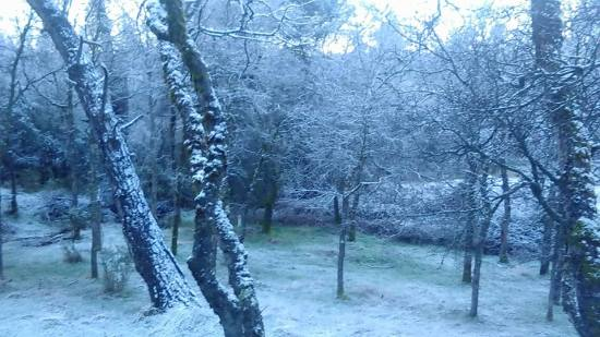 morningsnow