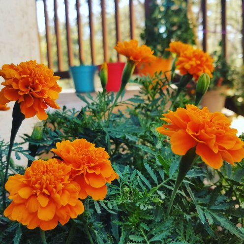 marigolds taught me so much!