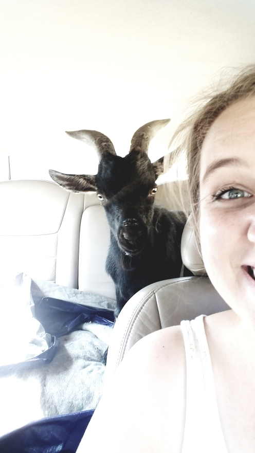 billy goat in the backseat! fun story!
