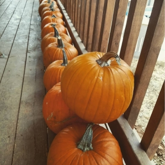 pumpkins galore!